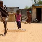 Kinder arbeiten in einer Reismühle